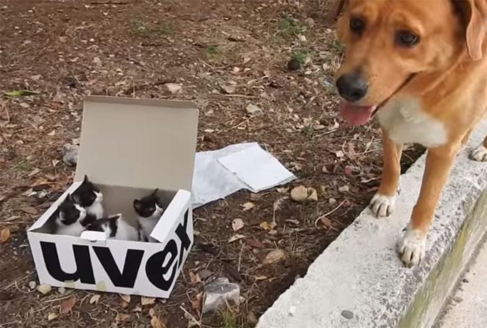 Perro rescata gatitos y se convierte en padre adoptivo