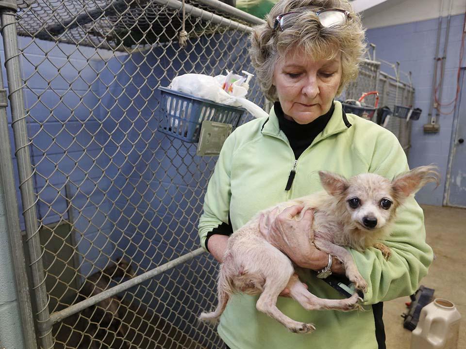 Perro rescatado en Lafayette