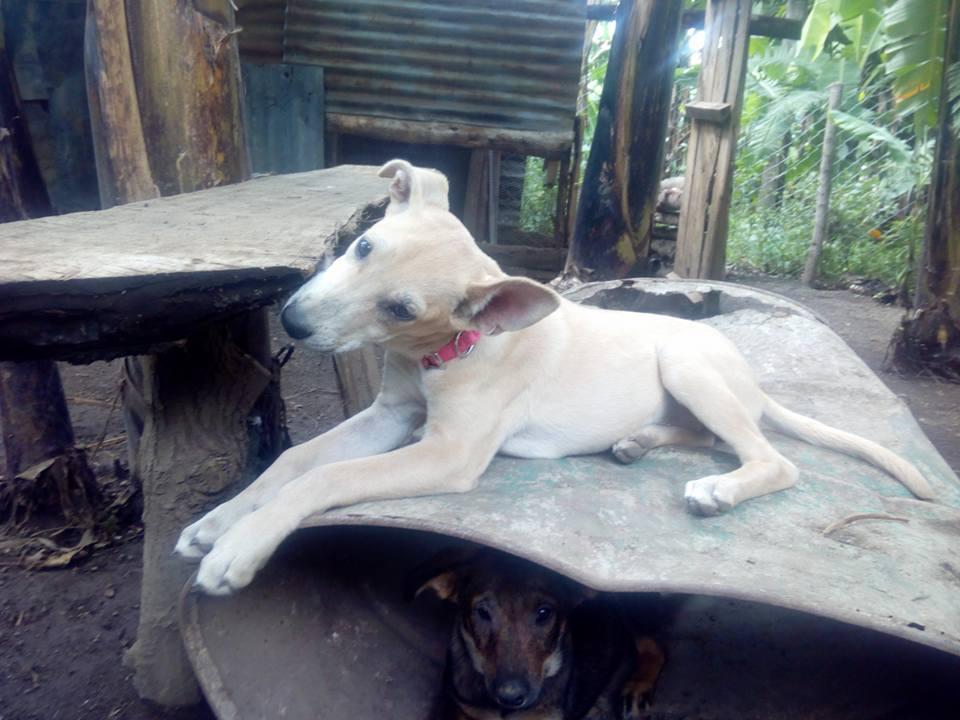 Perro rescatado por Ismael