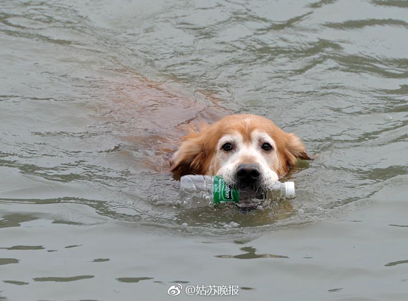 Perro saca botellas de río