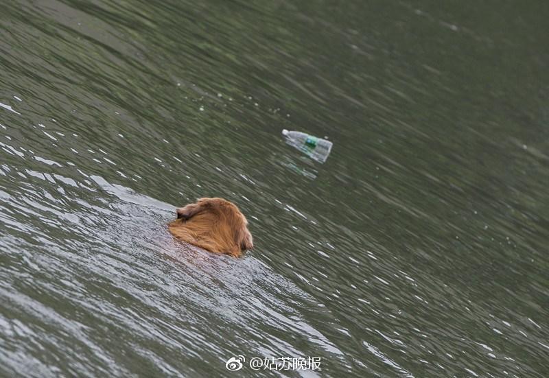 Perro sacando basura del río
