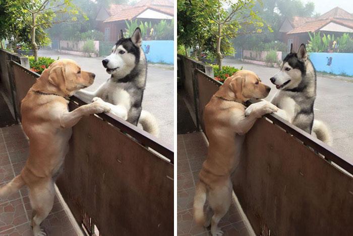 Perro se abraza con su mejor amigo
