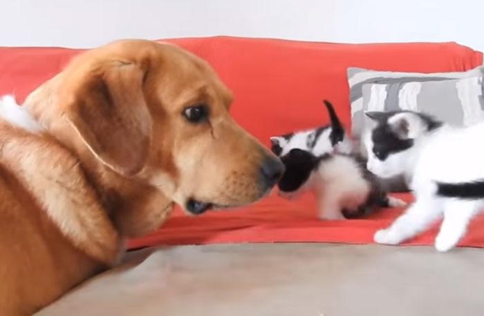 Perro y gatitos