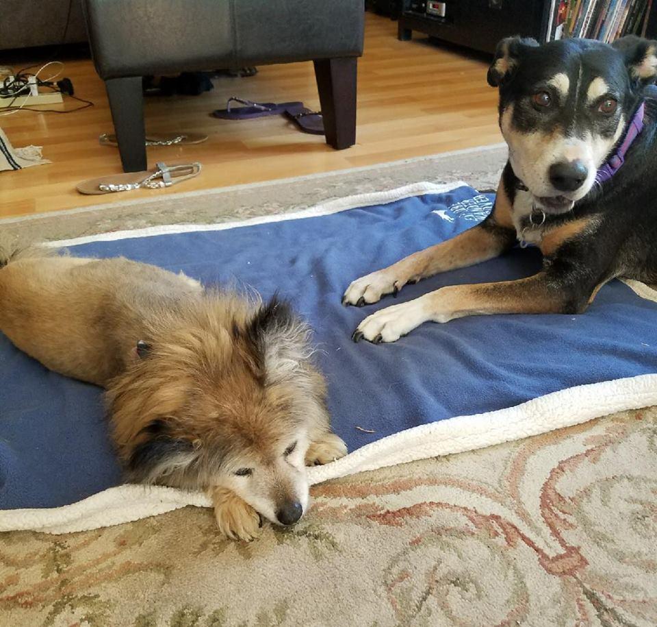 Perro y su amigo