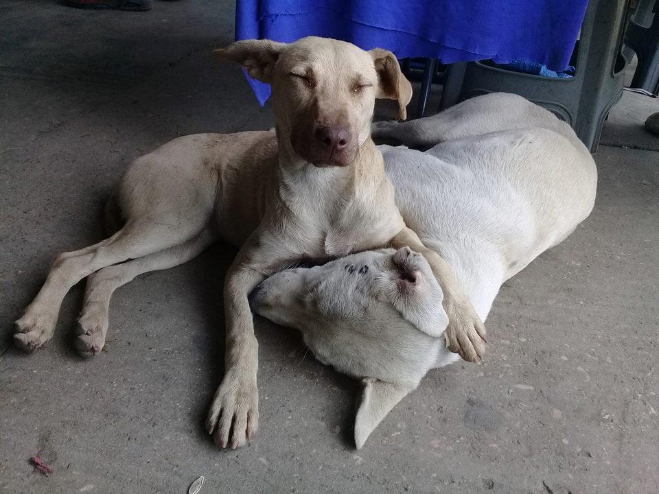 Perros en Oaxaca