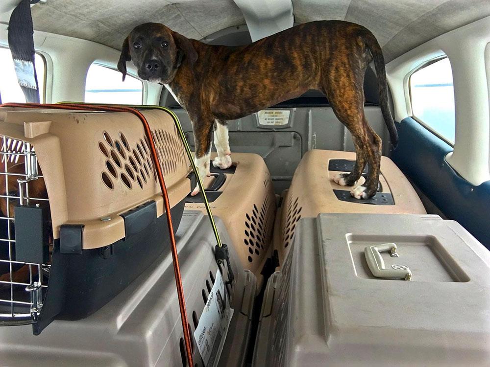 Perros en avión