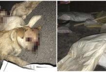 Perros golpeados hasta la muerte en China