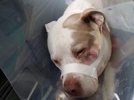 Policía le disparó a dos perros en su propio patio