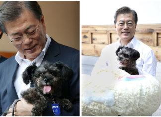 Presidente de Corea del Sur adopta a perro rescatado
