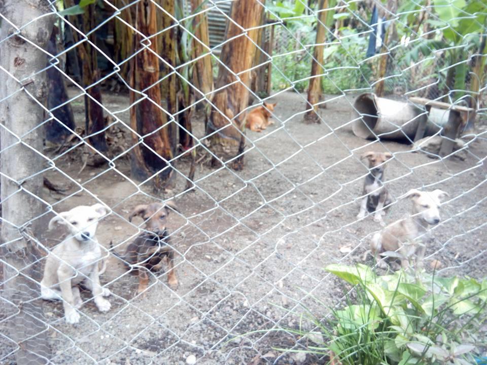 Santuario para perros