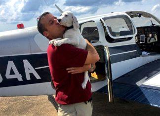 Veterano del ejercito rescata cientos de animales del corredor de la muerte