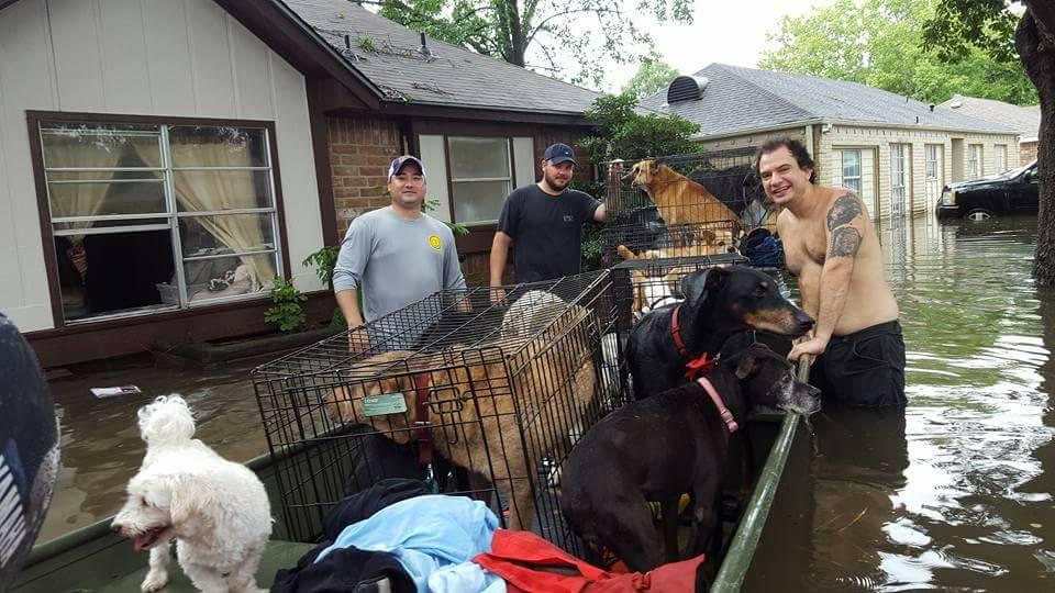 21 perros fueron rescatados por buenos samaritanos