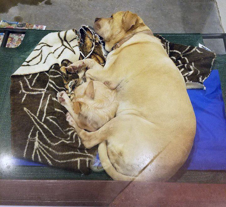 Bonnie y Clyde duermen juntos