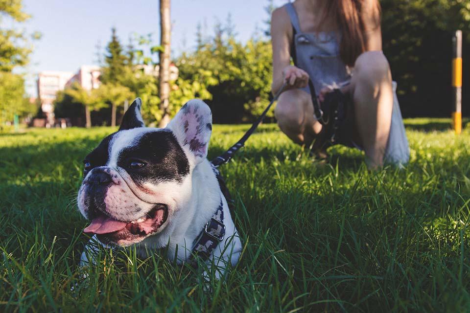 El golpe de calor en perros se da cuando el organismo del animal aumenta significativamente su temperatura, siendo incapaz de regularla por sí mismo