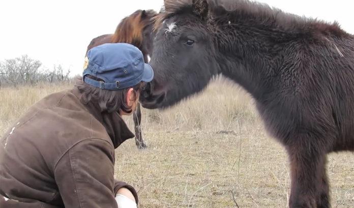 Caballo salvaje encadenado agradece a su salvador con un beso