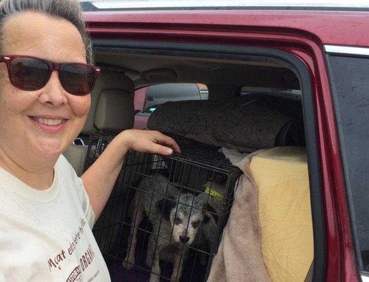 Cachorro rescatado del huracán