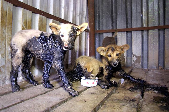 Cachorros fueron rescatados