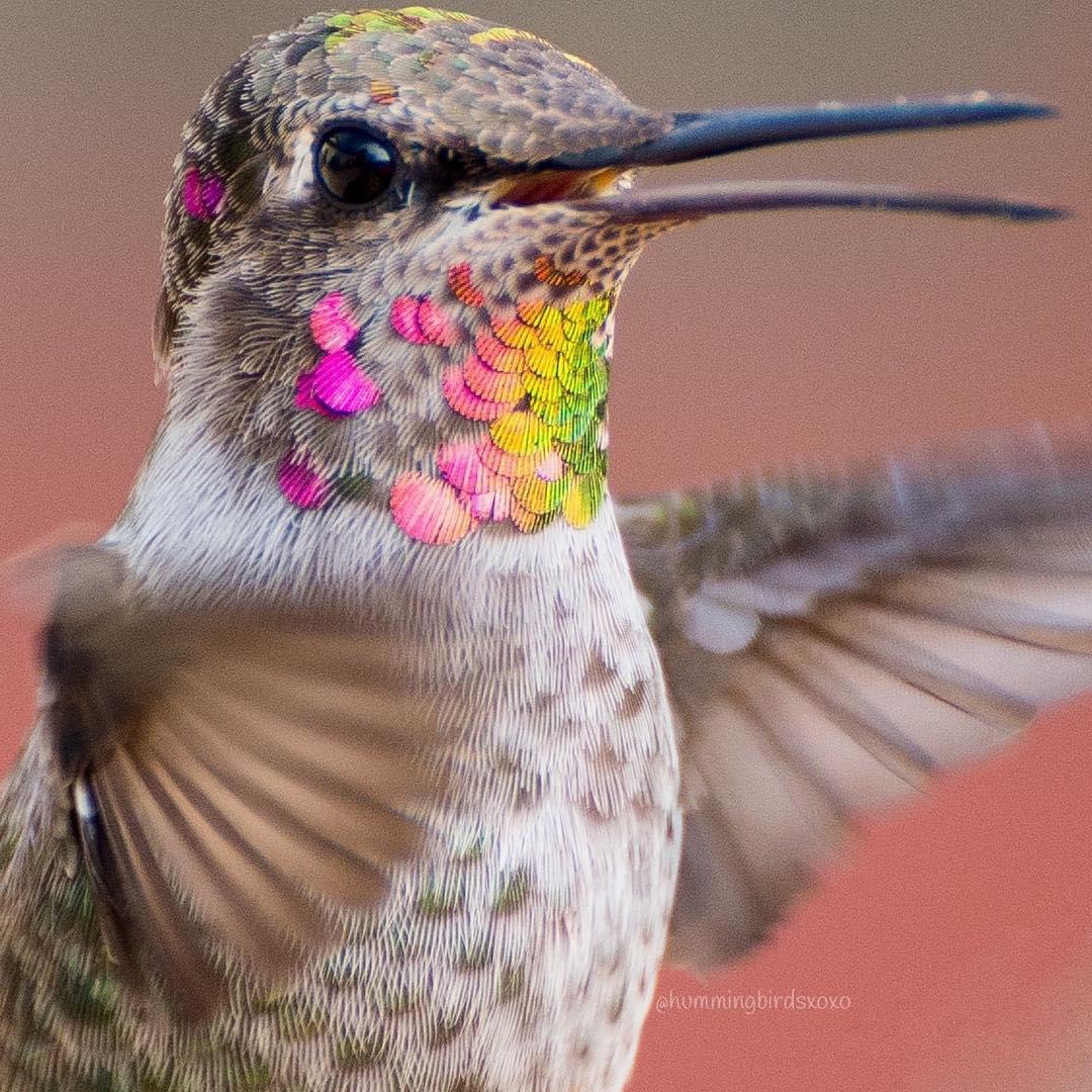 Colores del colibrí