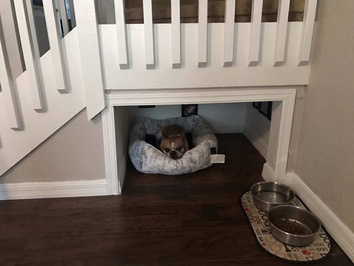 Cuarto minúsculo para el perro