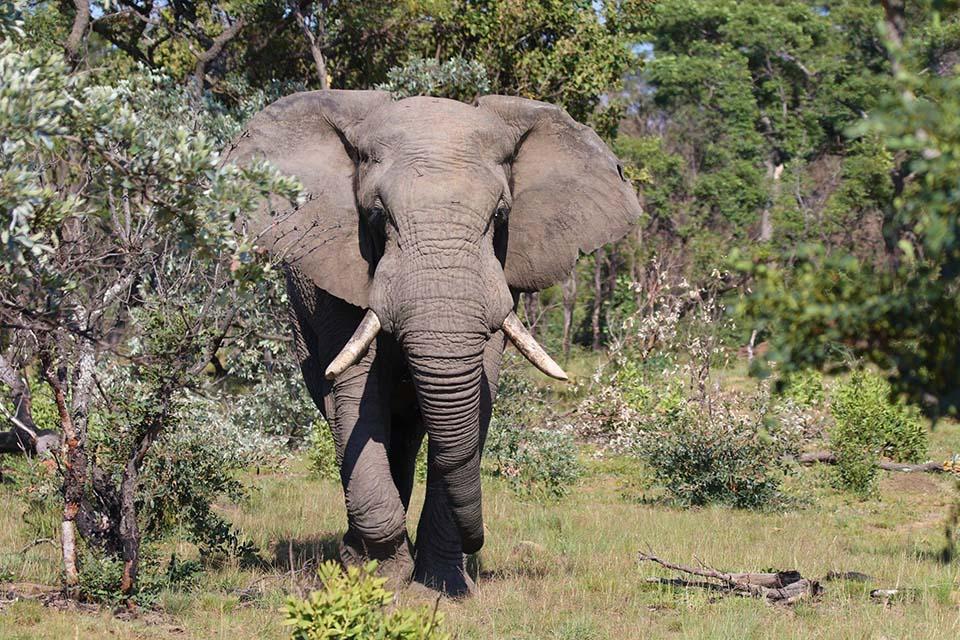 Elefante en Tanzania