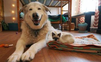 Flora es amiga de 4 gatitos