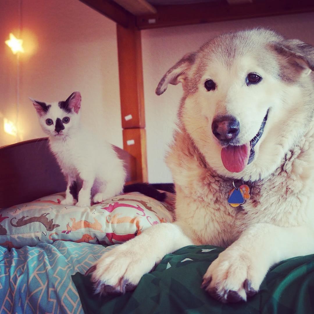 Flora y un gatito