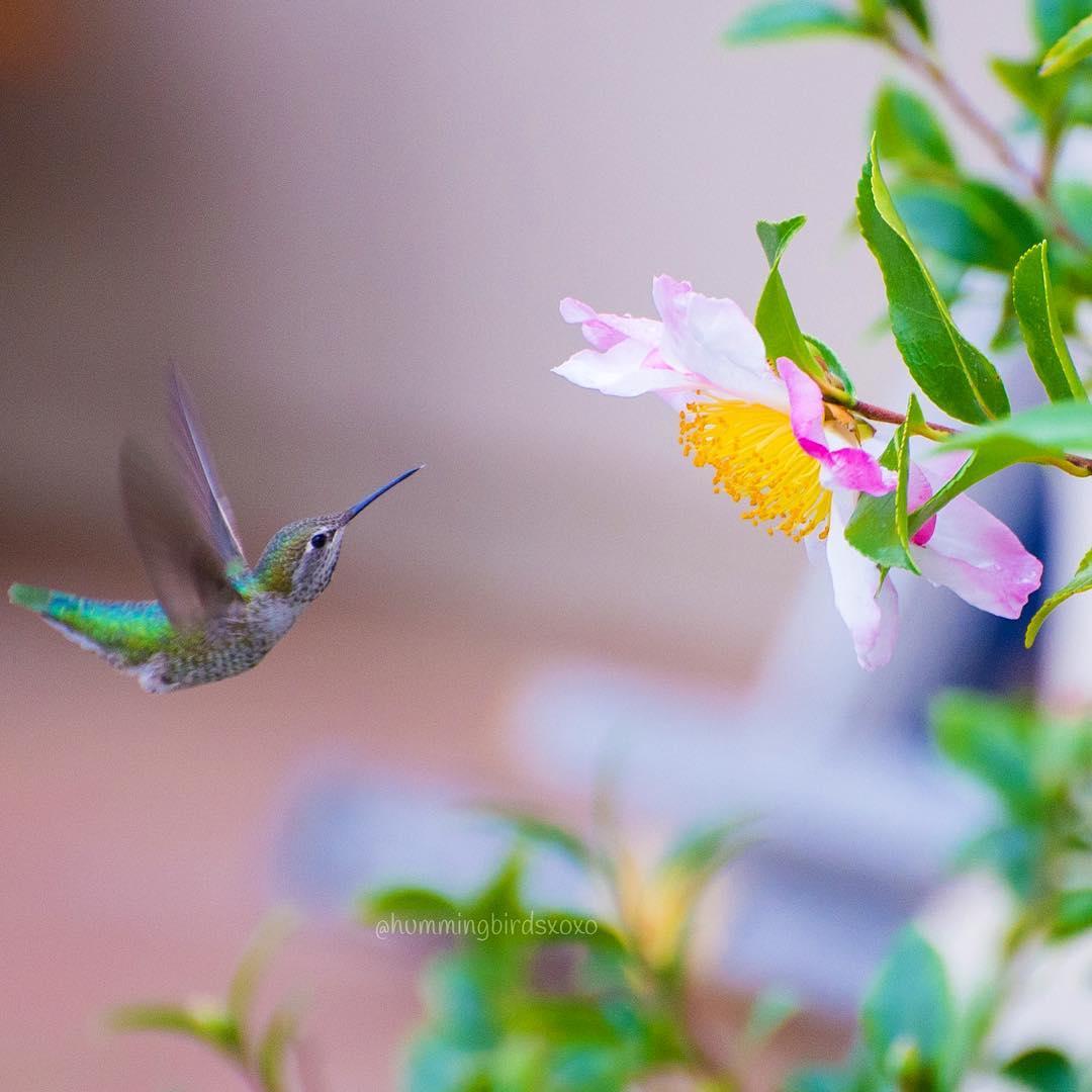 Foto de colibrí