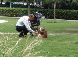 Foto de un perro viejo y un hombre conmueve a millones