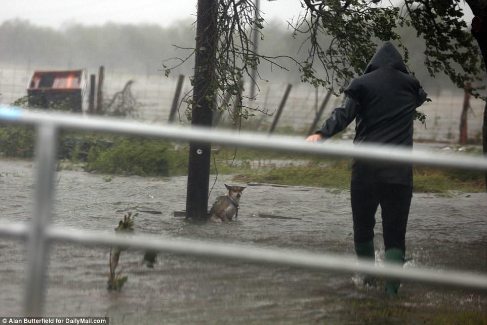 Fotógrafo rescata perro