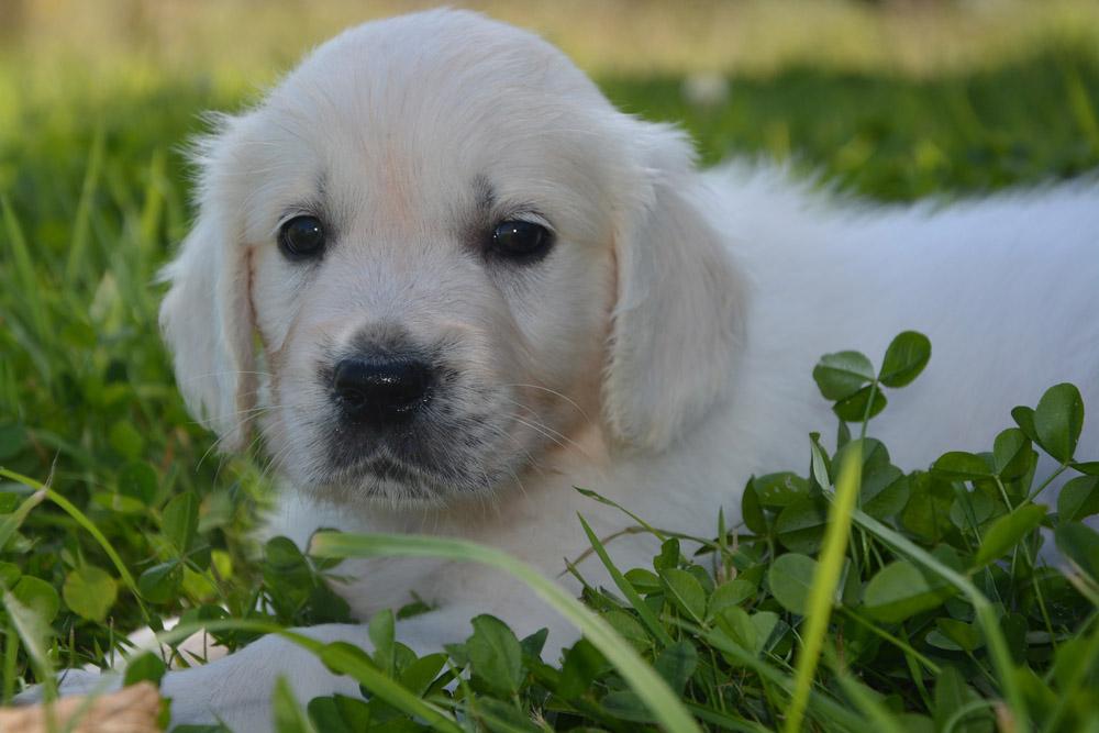 Gastroenteritis en canes