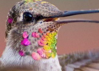 Hermosas fotos de colibríes