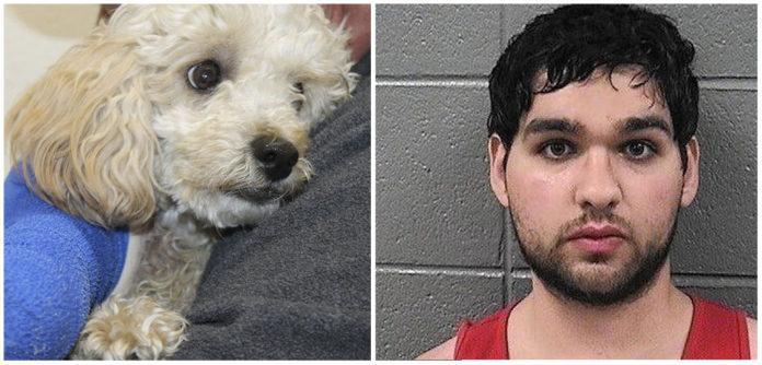 Hombre condenado a prisión despues de lanzar a dos perros de un 5 piso