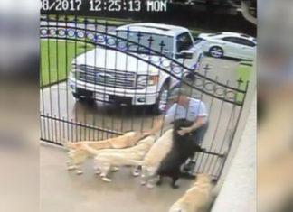 Hombre del correo saluda a un grupo de perros