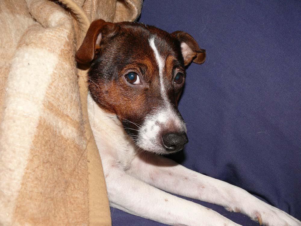 La gastroenteritis en perros
