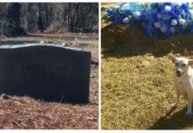 Mujer resuelve el misterio de la perra en la tumba de flores azules