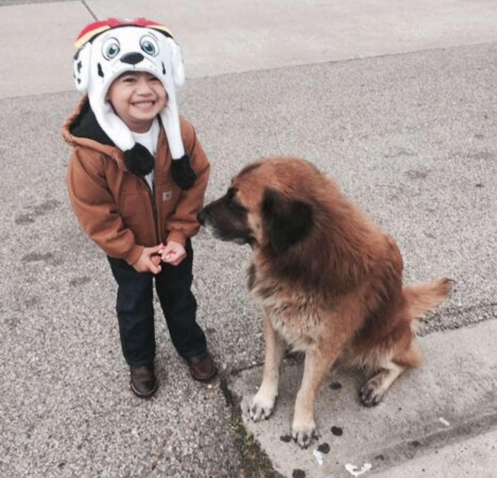 Otis perro de asistencia