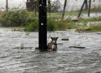 Perro abandonado encadenado durante huracán Harvey