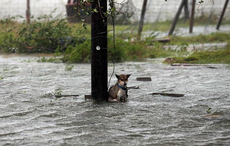 Perro abandonado atado a un poste durante huracán Harvey