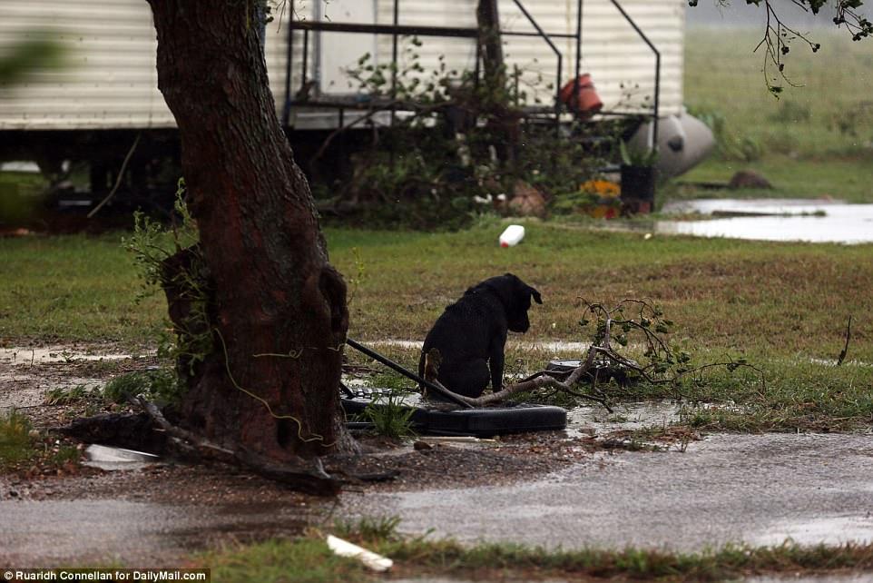 Perro amarrado en el huracán