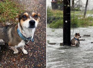 Perro atado a un poste es rescatado por fotógrafo
