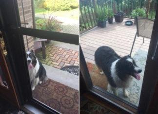 Perro camina 4 cuadras para visitar a su amigo