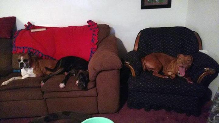 Perro en hogar temporal