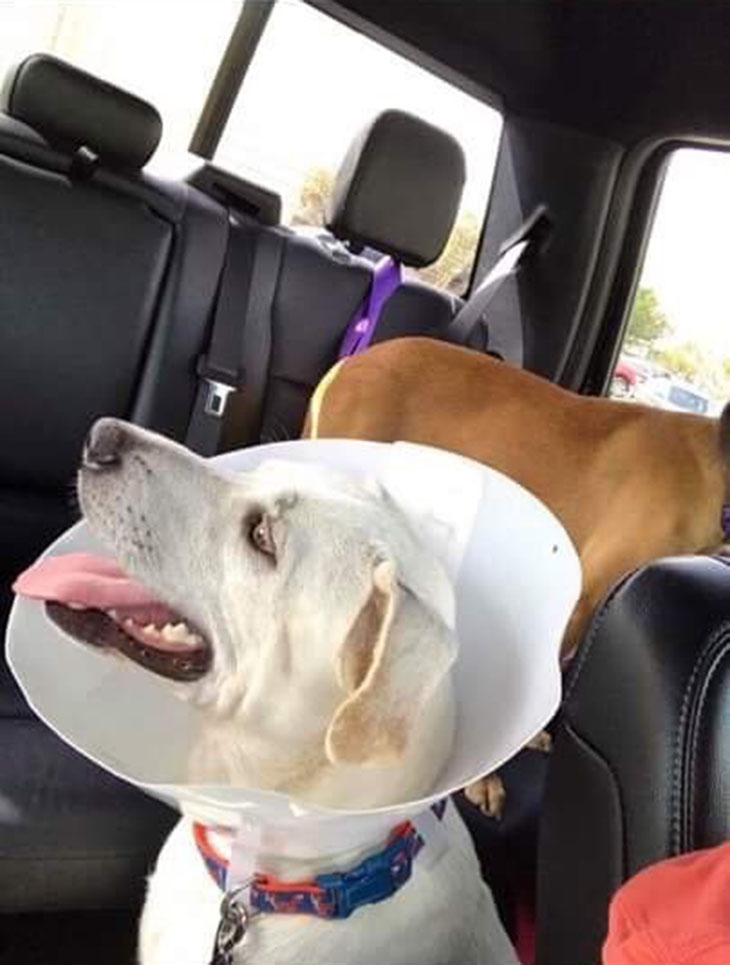 Perro salvado del huracán