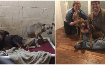 Perros asustados adoptados juntos