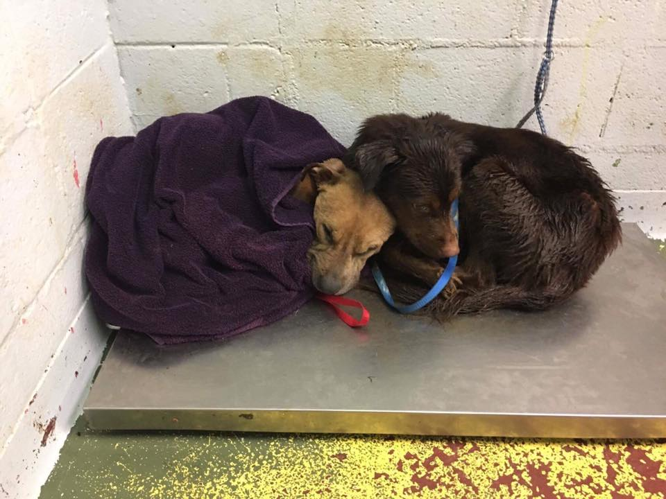 Perros asustados en el refugio