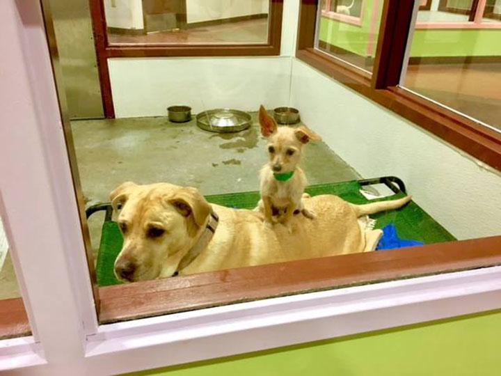 Perros desean ser adoptados juntos