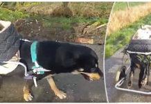 Perros discapacitados son mejores amigos