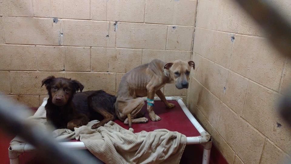 Perros en el refugio