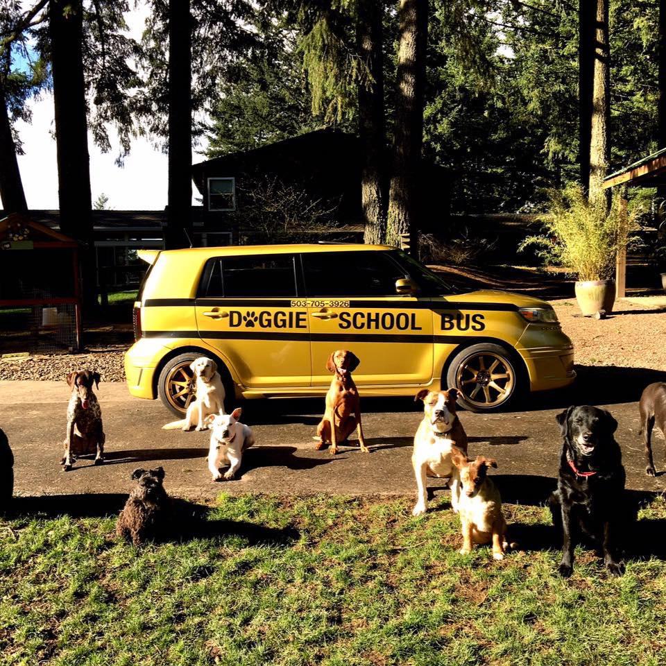 Perros en la guardería