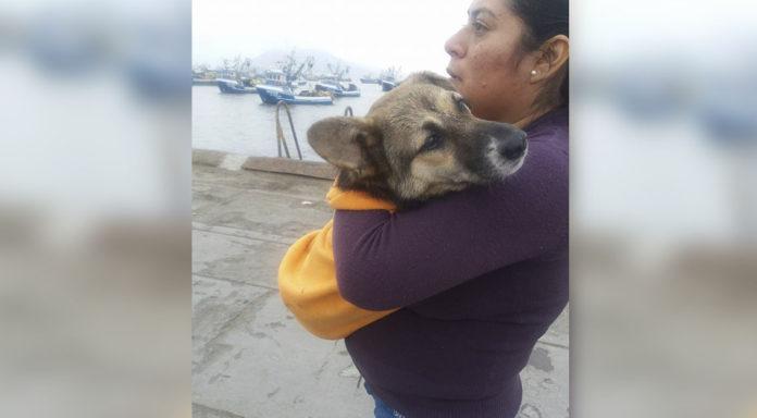 Rescatan perro iba a ser sacrificado por chinos